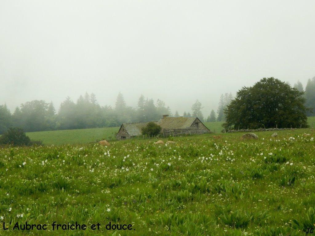 étable et brouillard