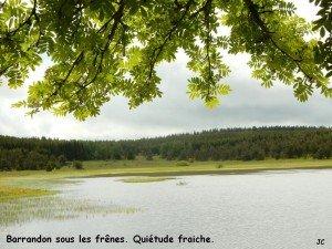 Frênes et l'étang de Barrandon