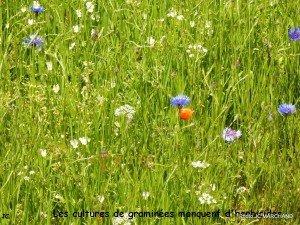 Mais que font les herbicides-001