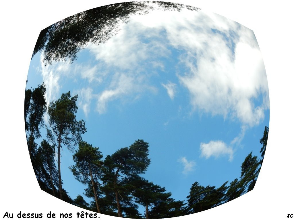 pins et ciel